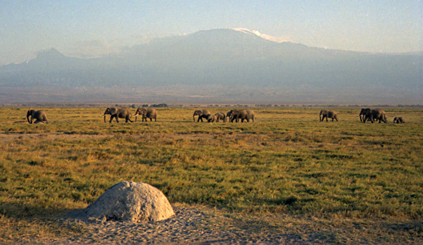 Elephants and Mount Kilimanjaro.  Image:  Dan Lundberg