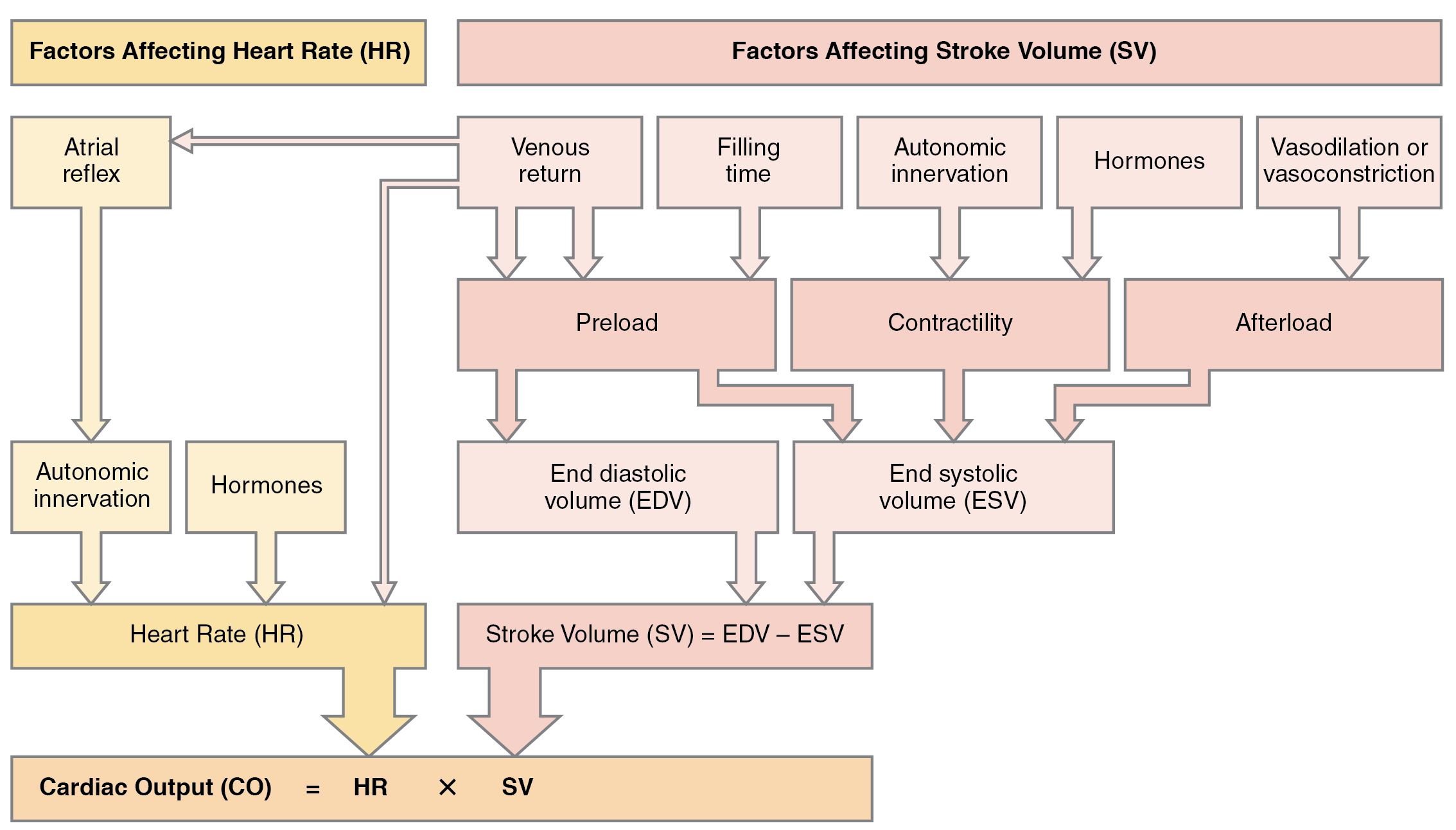 File:2036 Summary of Factors in Cardiac Output.jpg