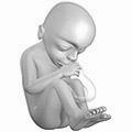 20 weeks pregnant.png