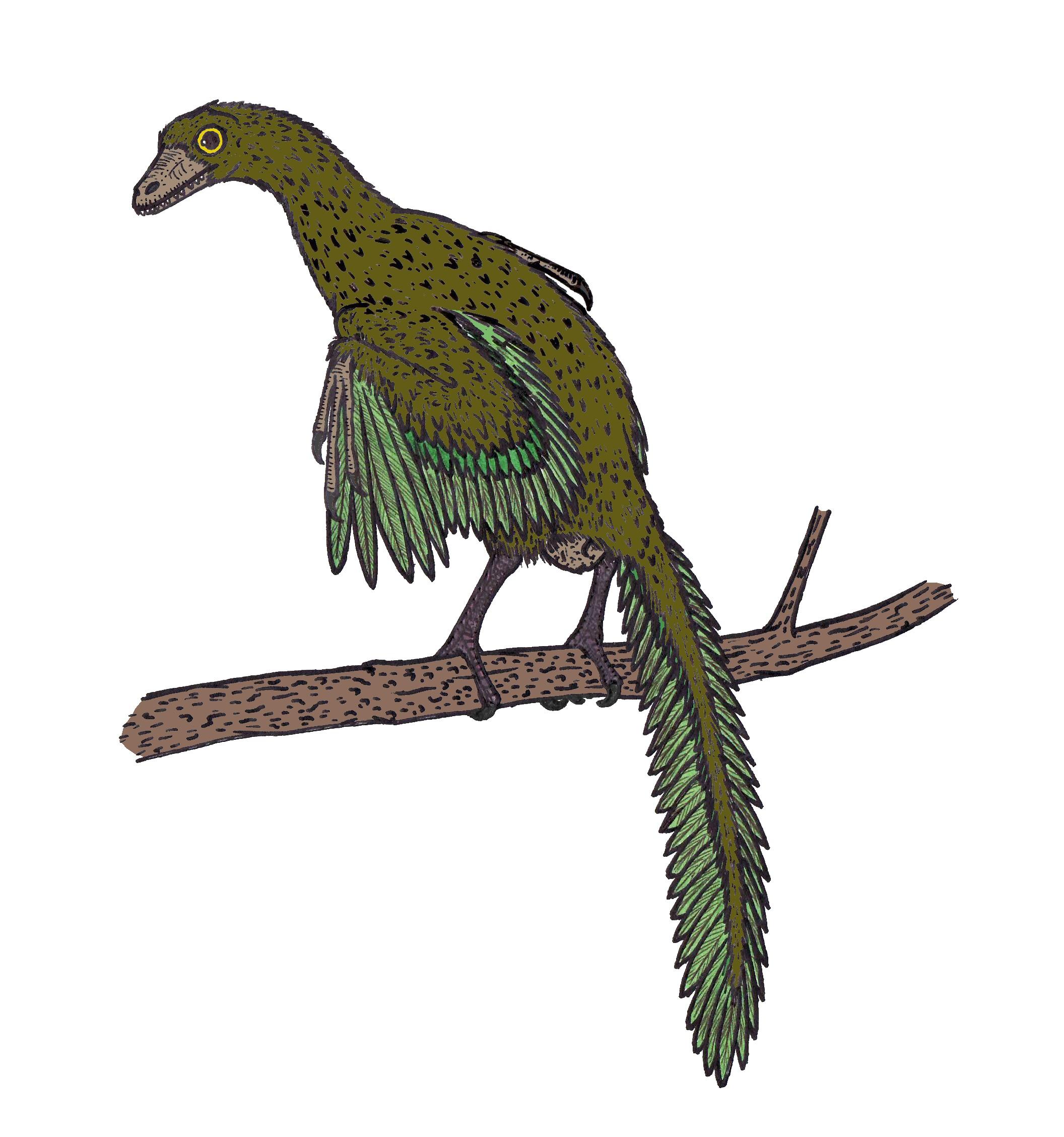 Картинки птицы робина появилась
