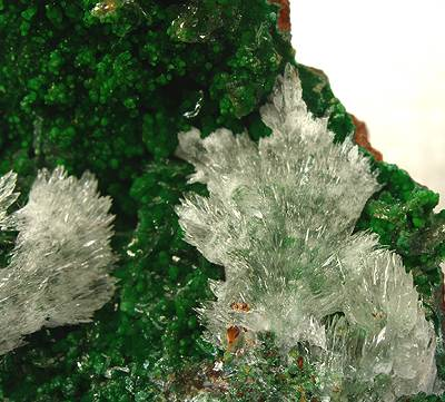 Austinite-Conichalcite-283277.jpg