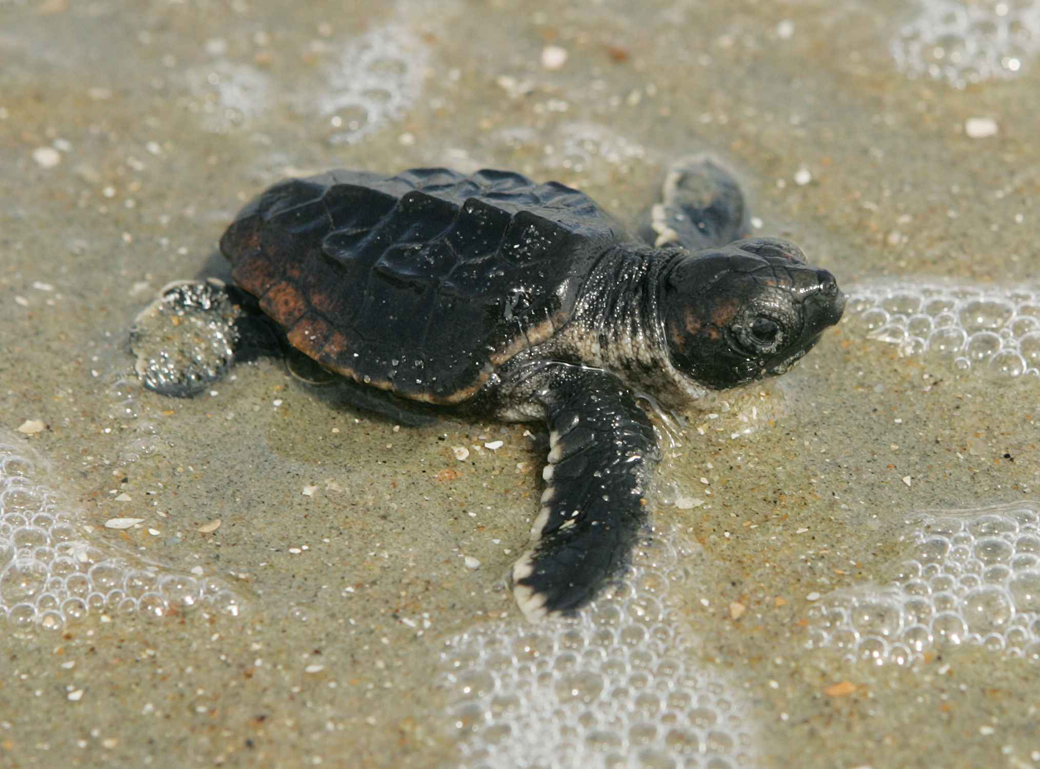 Turtle Club To Marriott Marco Island Distance