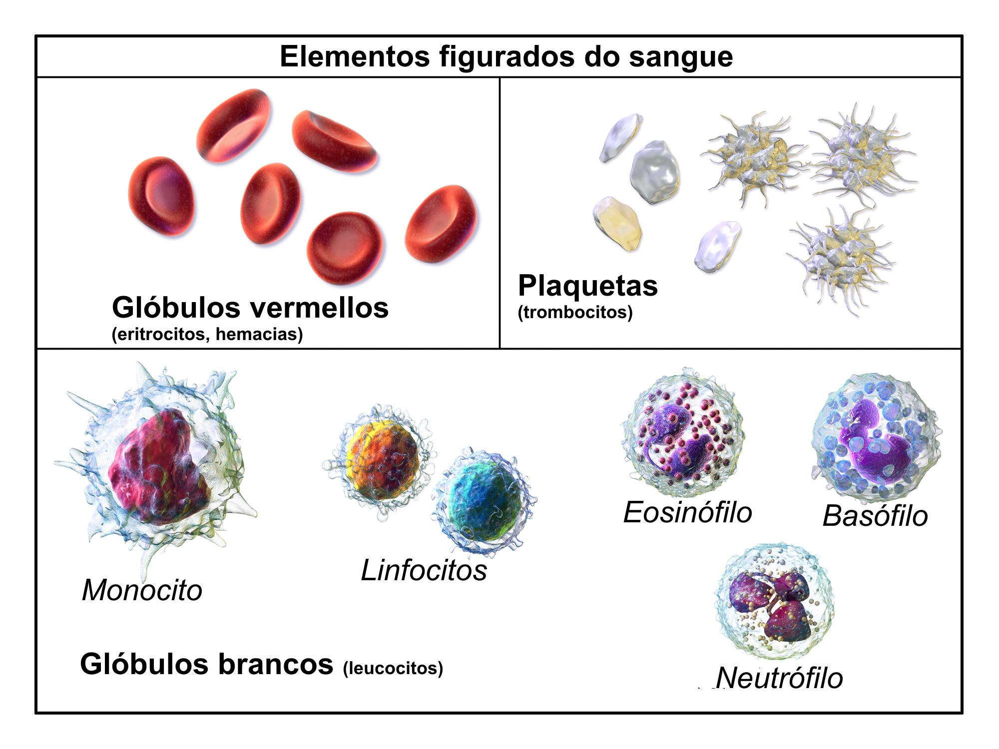 tipos-de-células-sanguíneas