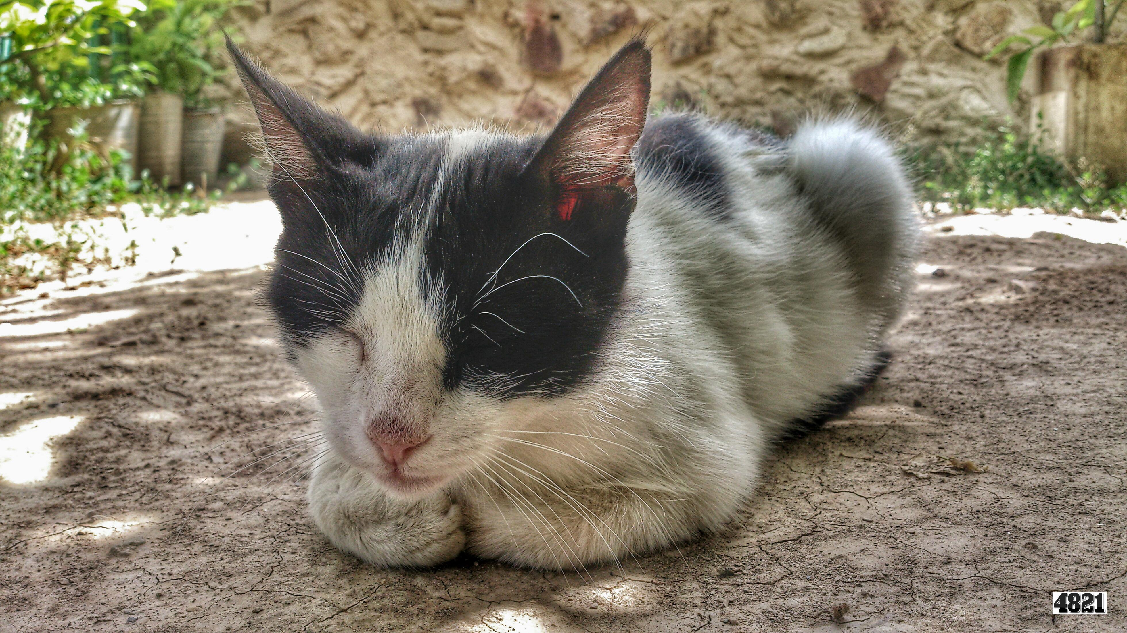 File:Cat kedi pisik svln4821 01.jpg