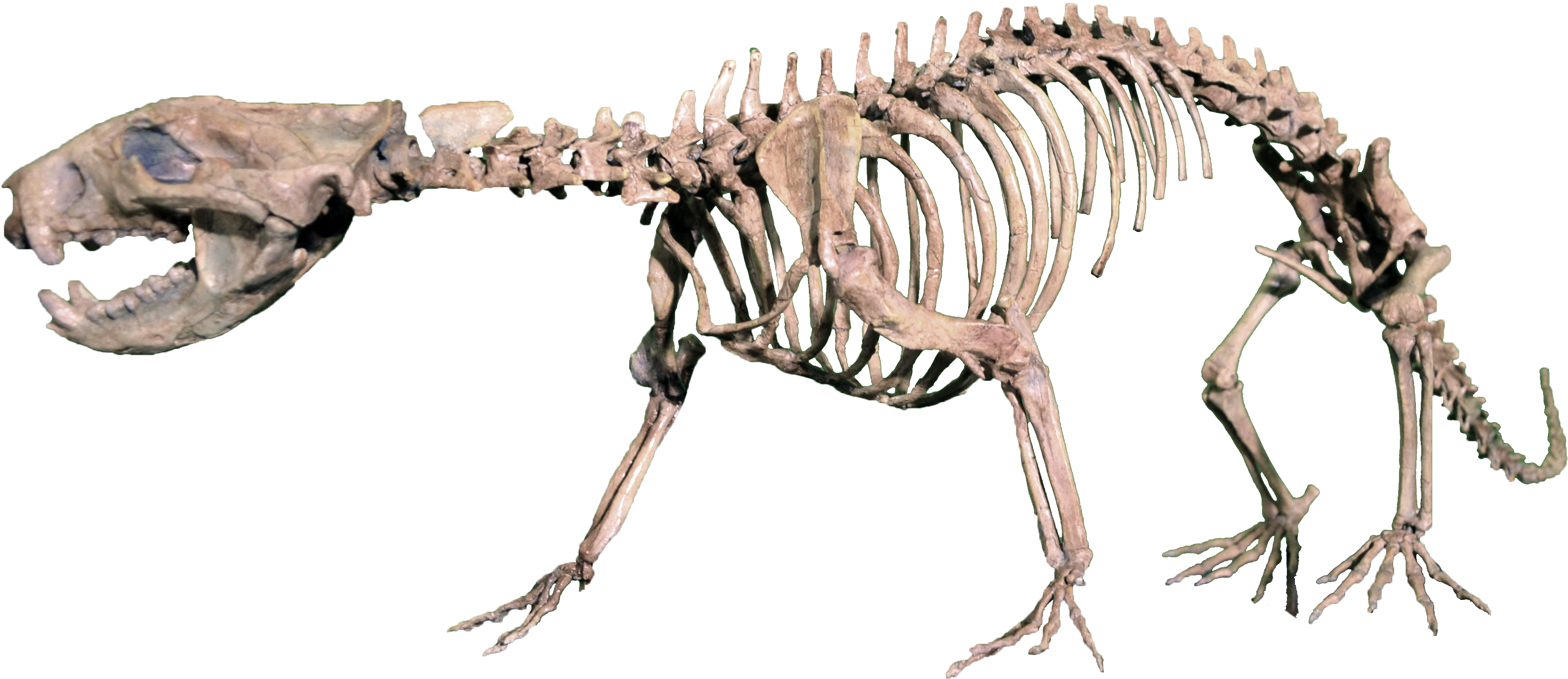 Best Bones To Feed A Dog