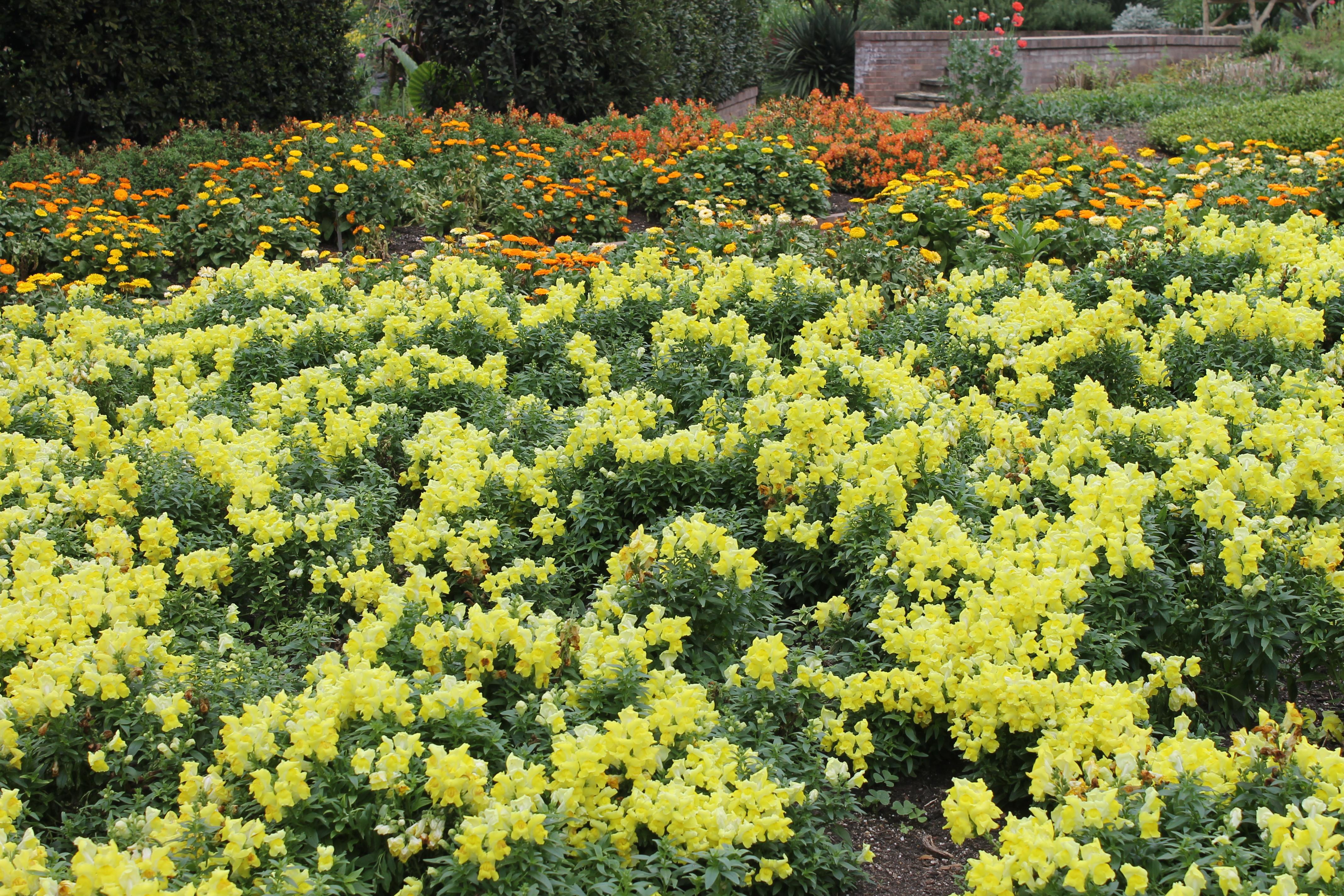San Antonio Botanical Garden Wikipedia