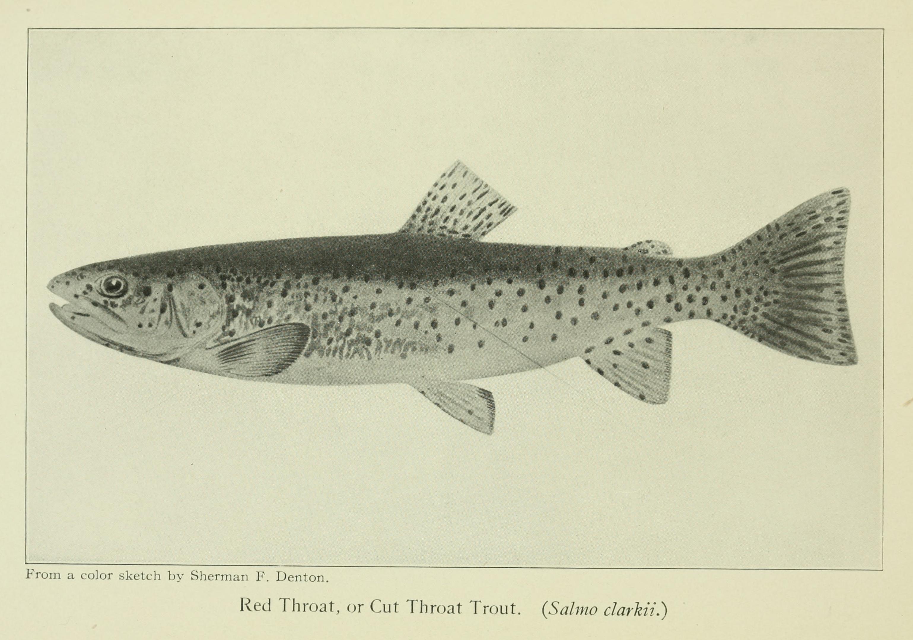 File:Favorite Fish and Fishing 11.jpg - Wikimedia Commons