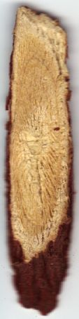 Glycyrrhiza glabra (chip of Spanish wood).jpg