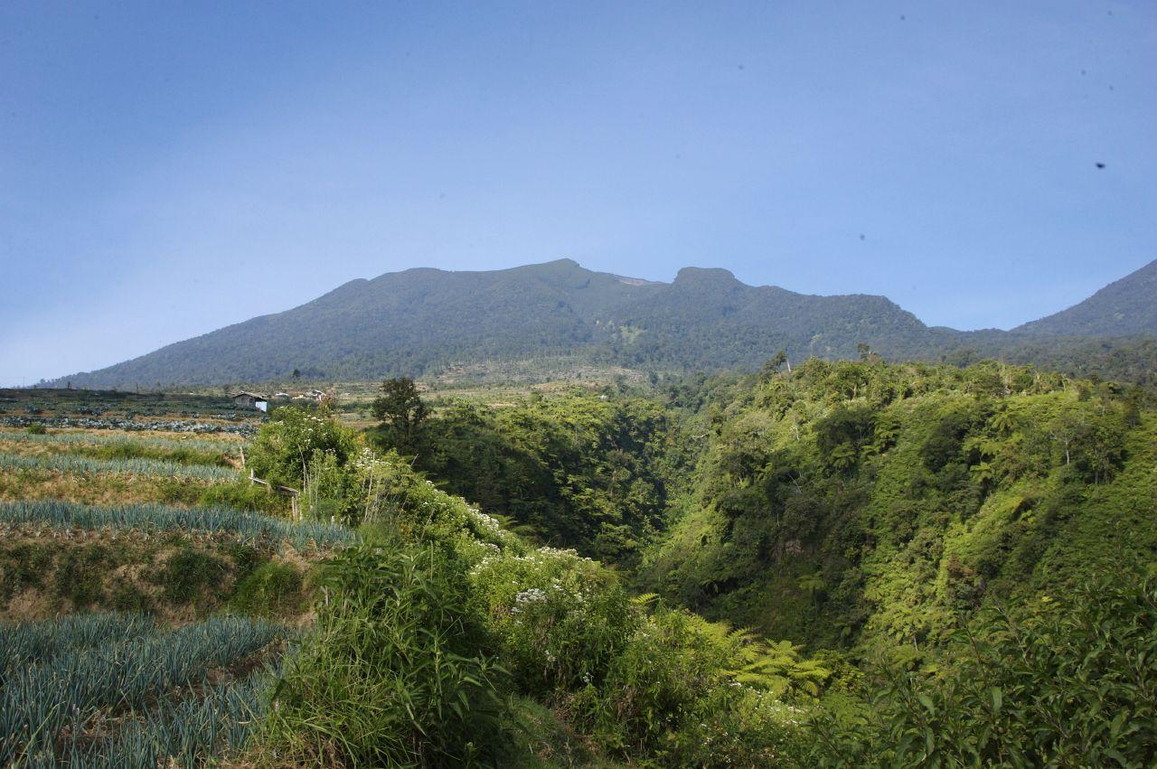 Description Gunung Gede Pangrango National Park - Flickr - Lip Kee.jpg