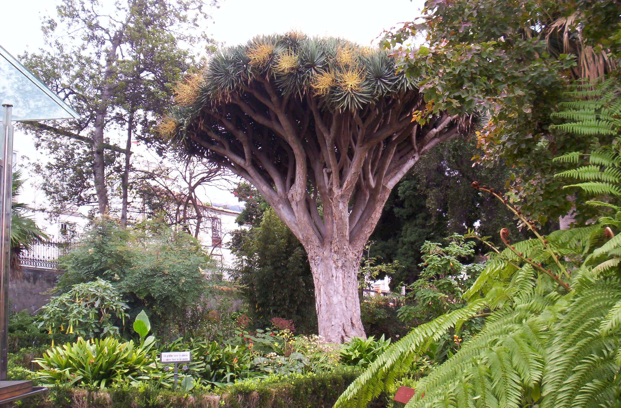 File wikimedia commons - El botanico puerto de la cruz ...
