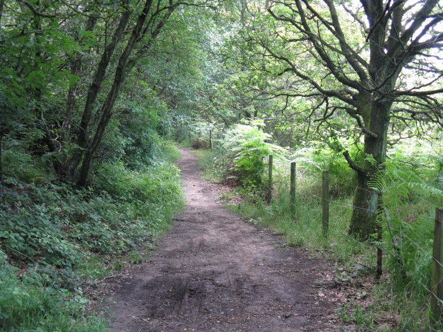 Into The Woods - South Of Walkerwood Reservoir - geograph.org.uk - 1399318
