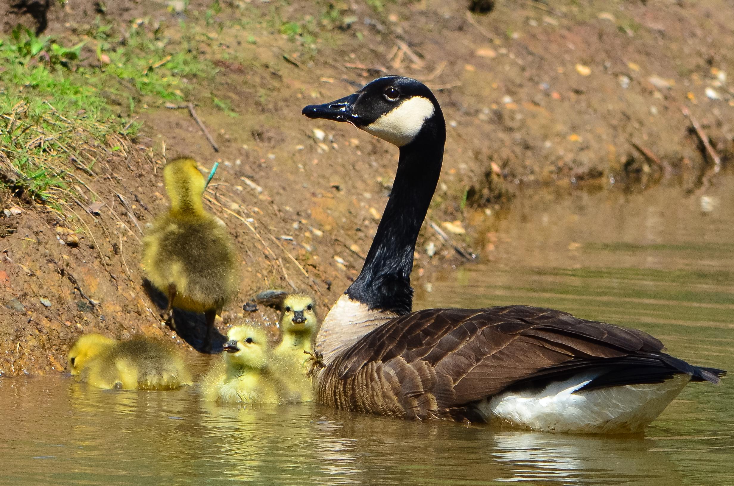 File:Kenilworth Aquatic Gardens (8666119235).jpg - Wikimedia Commons