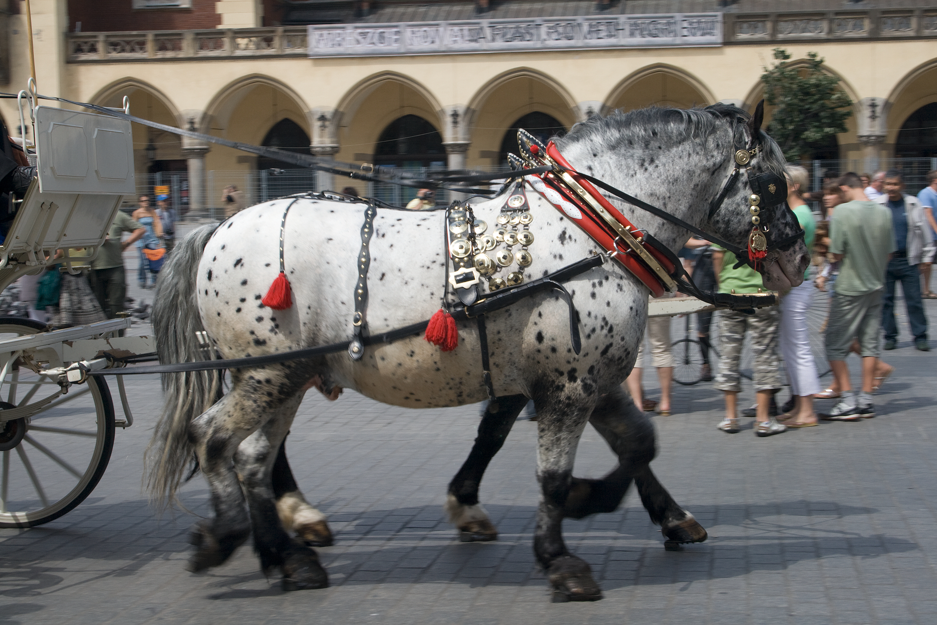 Krakowcarriagehorsesalpha horse harness wikipedia