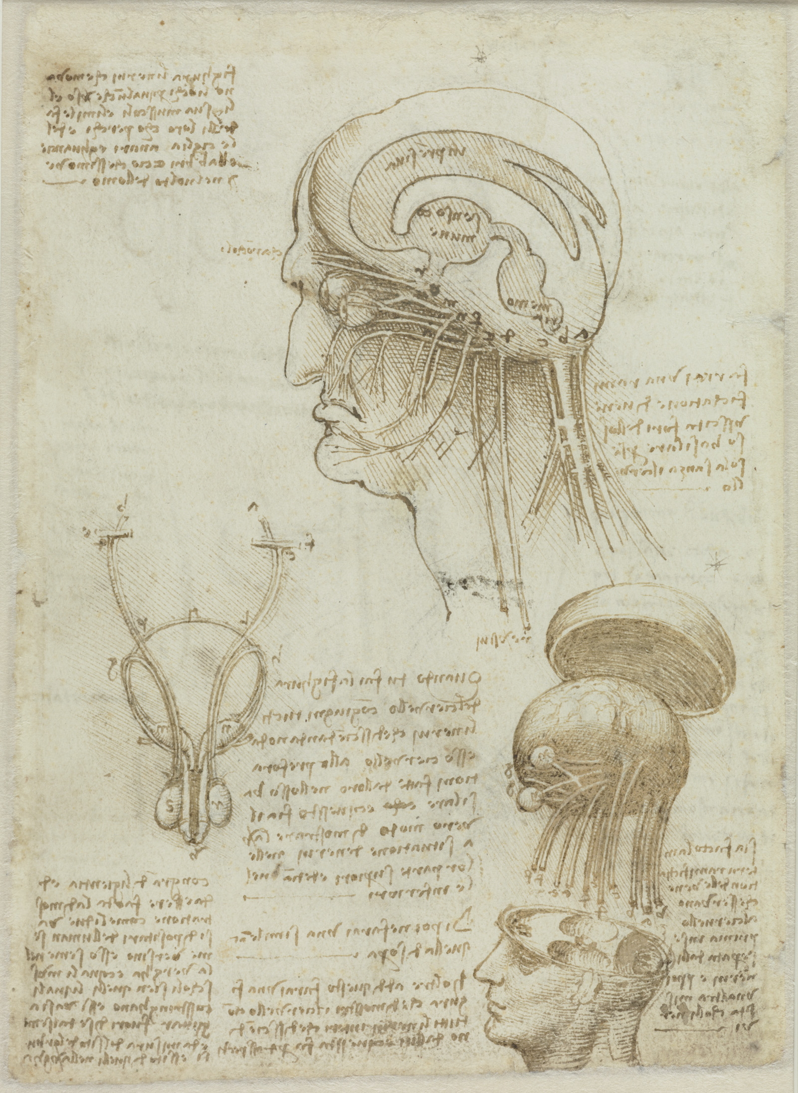 Datei:Leonardo da Vinci, Manuskriptblatt mit anatomischen ...