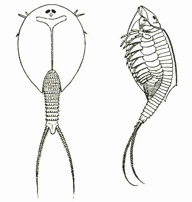 Branchiopoda