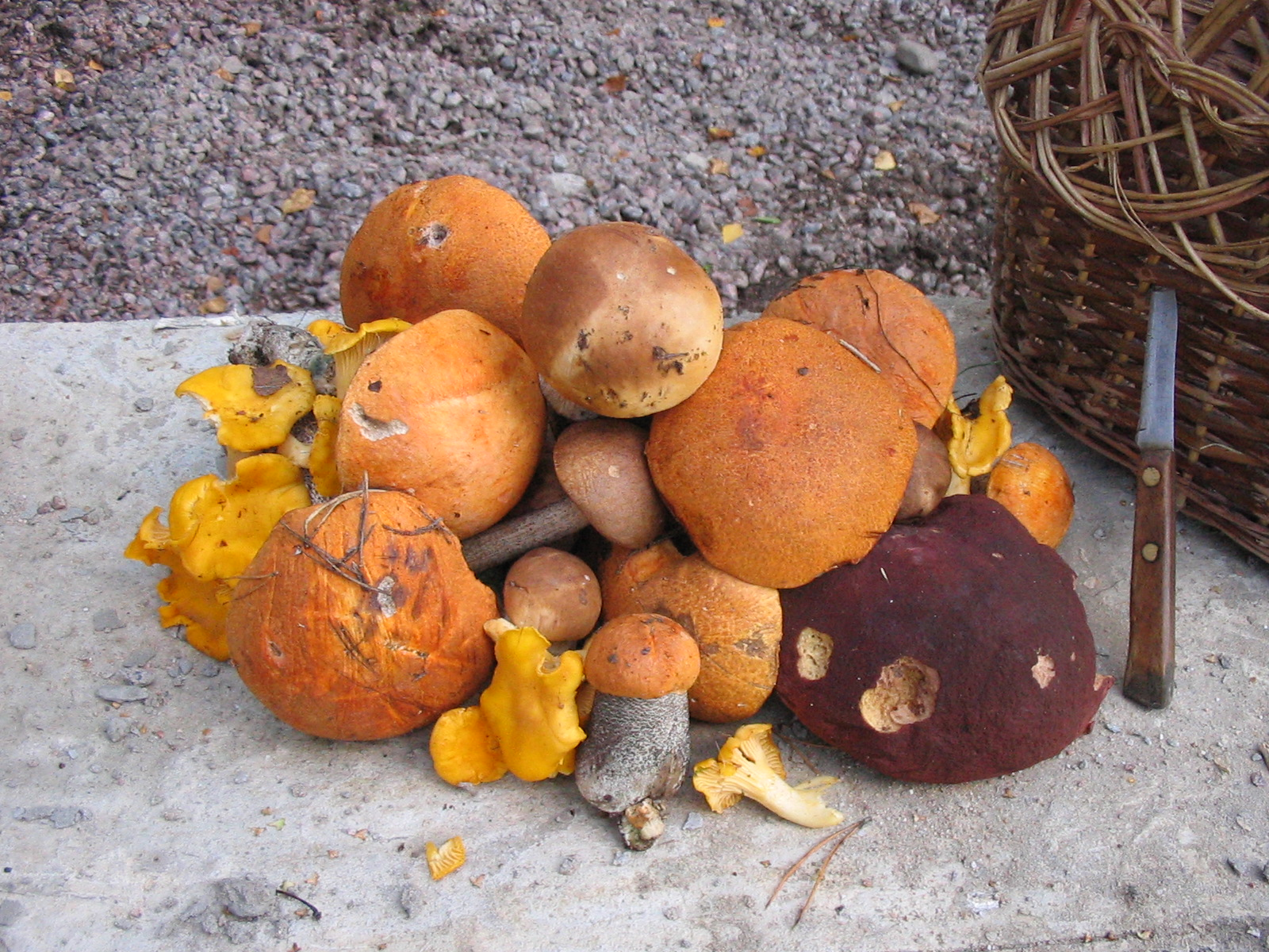 Alabama Edible Mushrooms http://commons.wikimedia.org/wiki/File:Mushrooms.jpg