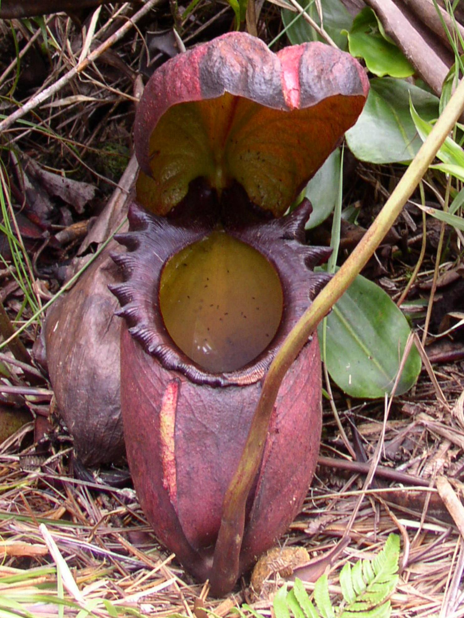 ウツボカズラやハエトリグサなど10種類の肉食植物を育成するキット - GIGAZINE