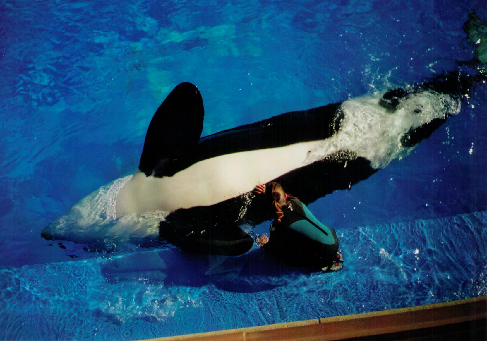 Do Baby Killer Whales Drink Milk