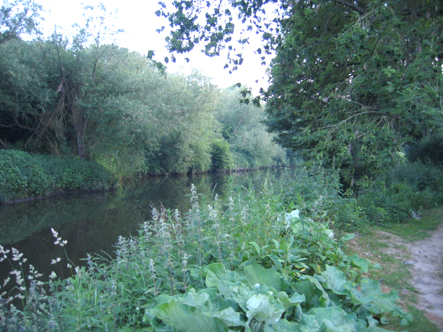 River Medway from the Medway Valley Walk, Maidstone, Kent - geograph.org.uk - 187910