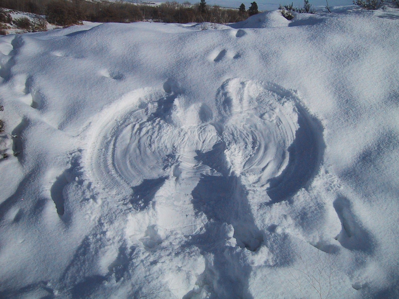 file snow angel jpg wikimedia commons ant clipart black and white ant clip art coloring pages