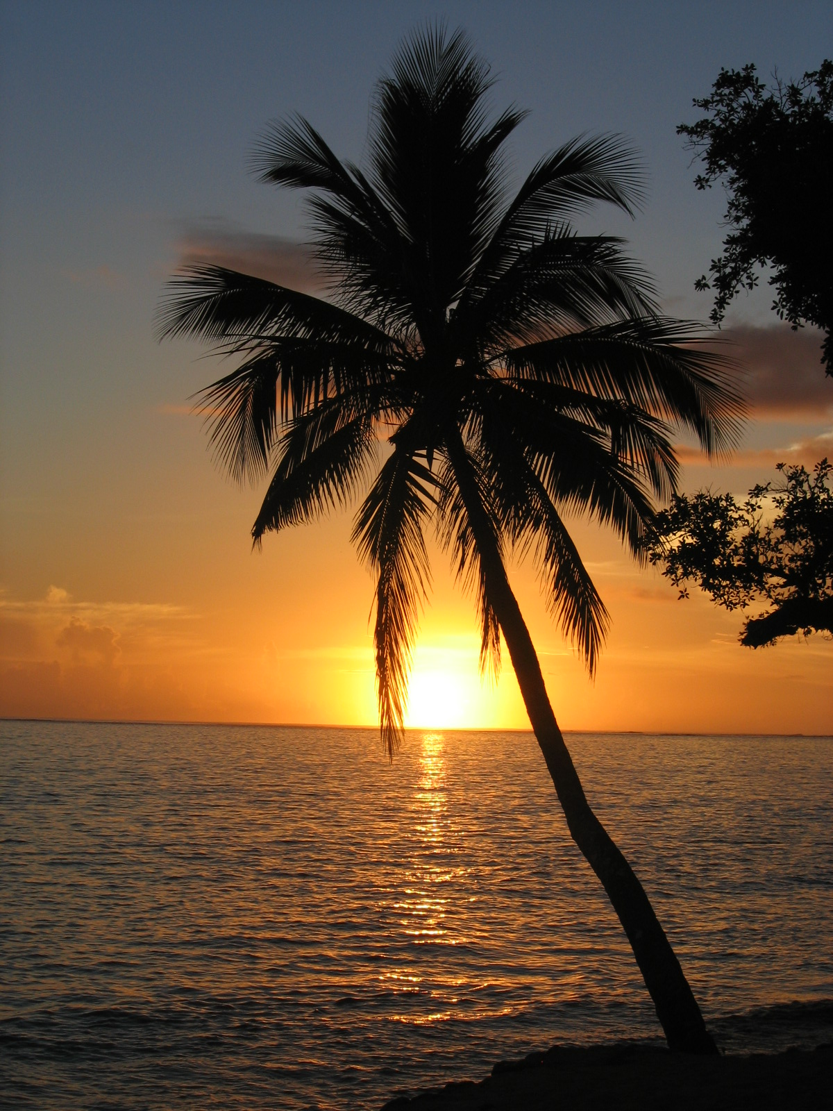 Description Sunset with coconut palm tree, Fiji.jpg