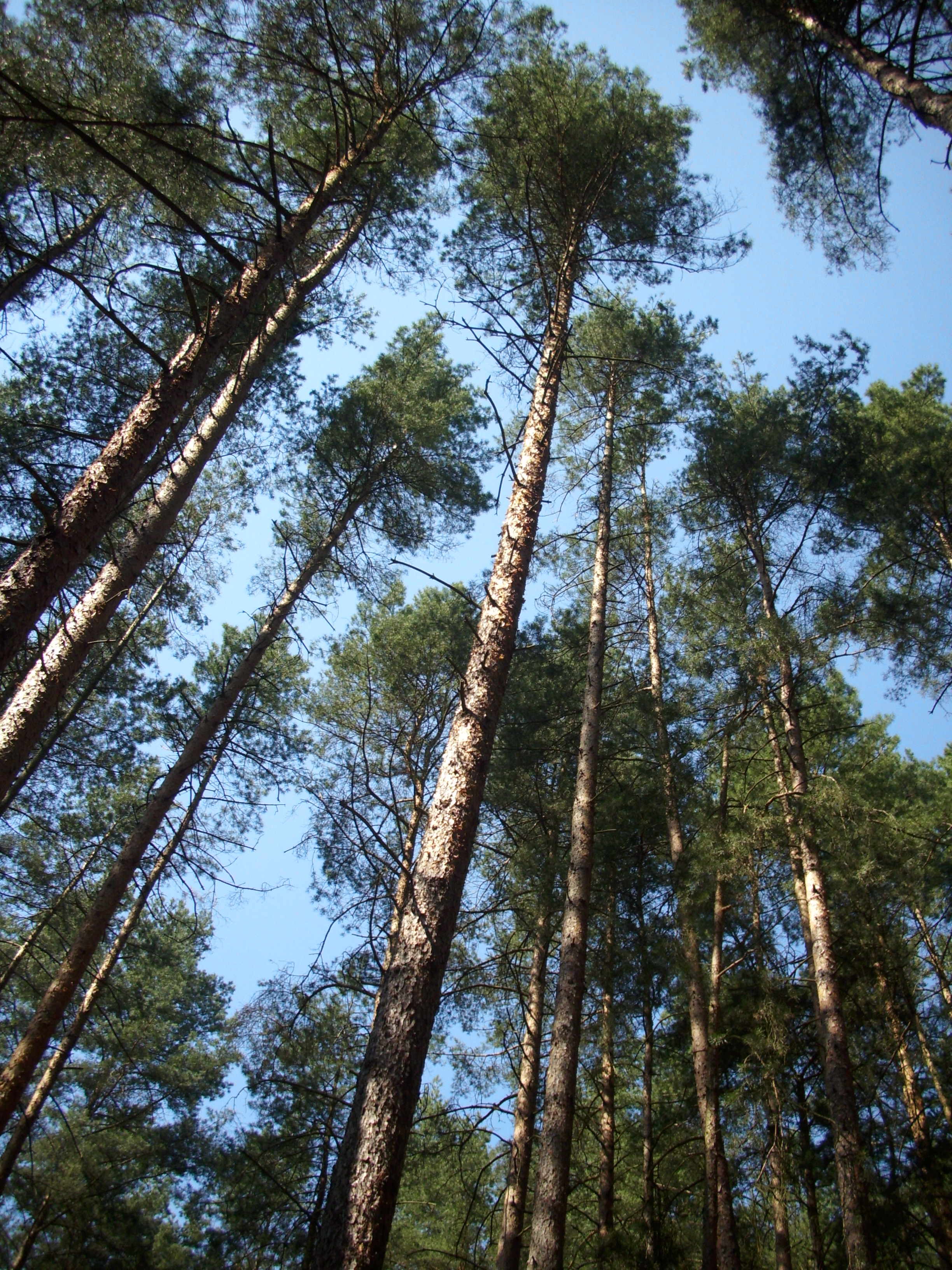 http://upload.wikimedia.org/wikipedia/commons/3/3f/Trees_in_woods,_Czech_republic.jpg