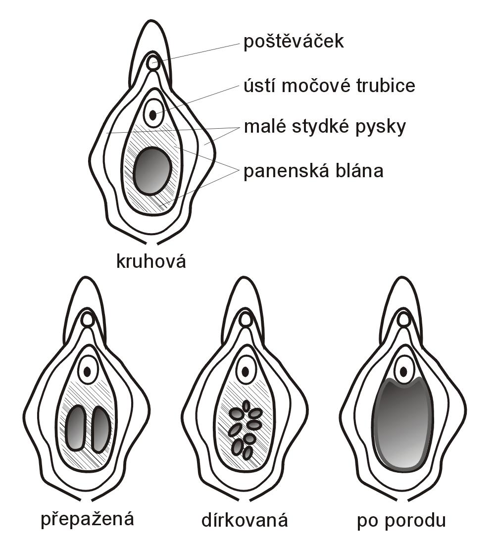 fisting-vaginalniy-sheyka-matki