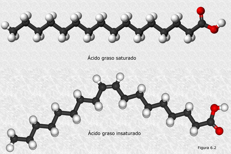 Acidos Grasos Insaturados Download