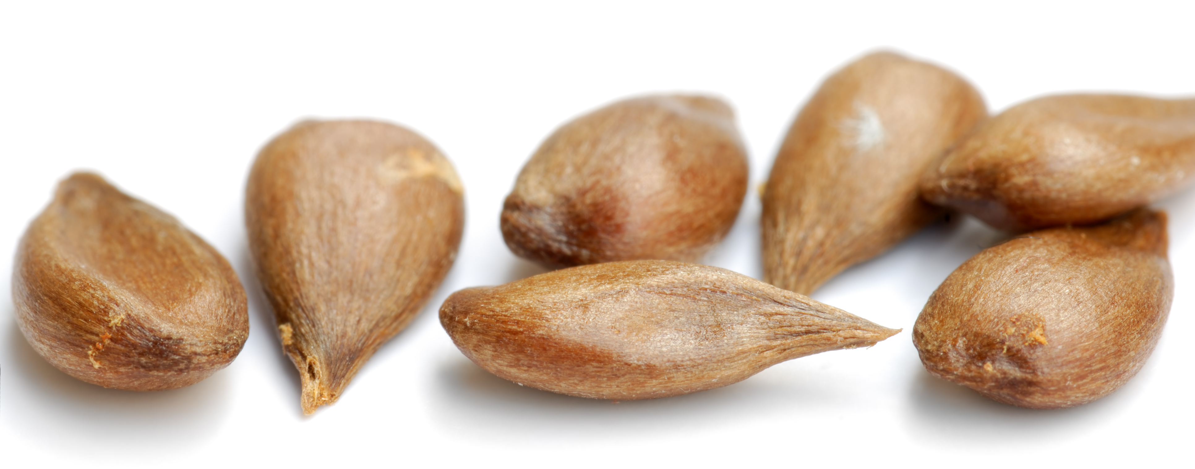 File:apple Seeds Variety