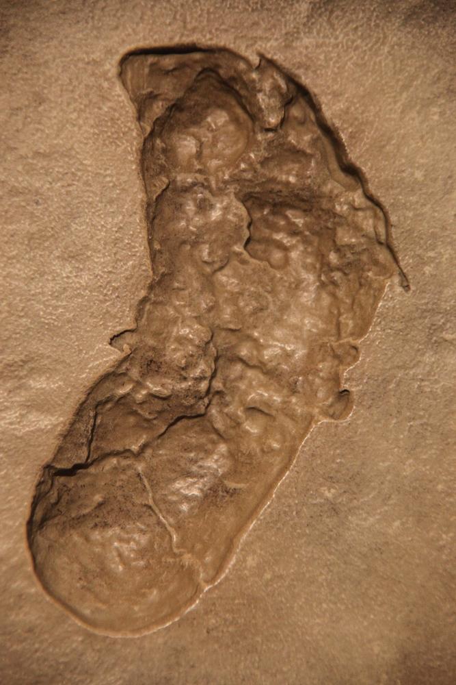 Ancient Natural History Texts