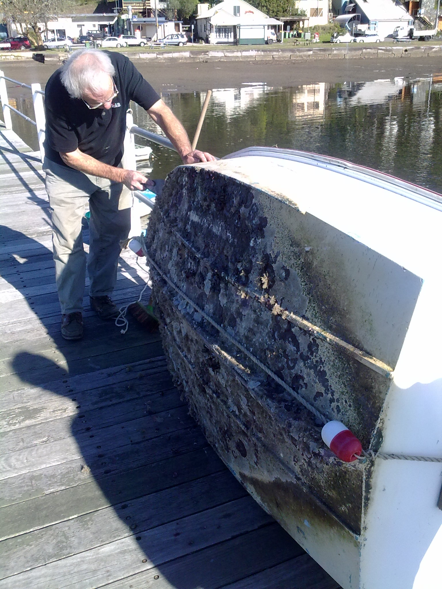 File:Boat fouling organisms (4875278100).jpg - Wikimedia Commons
