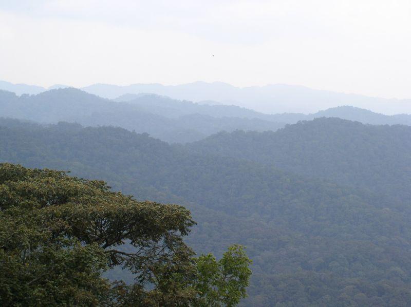 Aree protette africane: il parco Bwindi Impenetrable Forest è una preziosa riserva naturale.