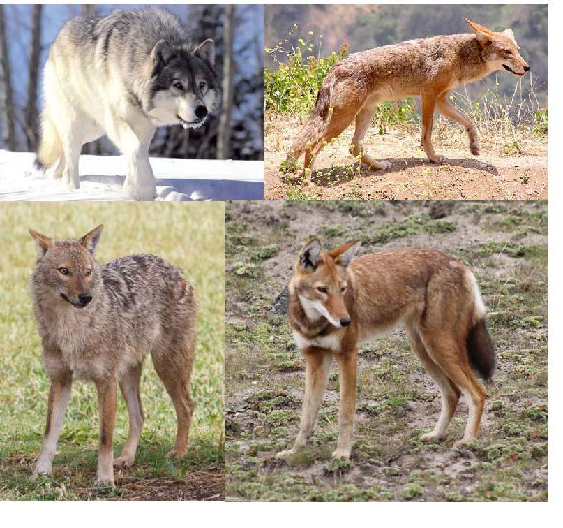 Fauna de Azerbaiyán - Wikipedia, la enciclopedia libre