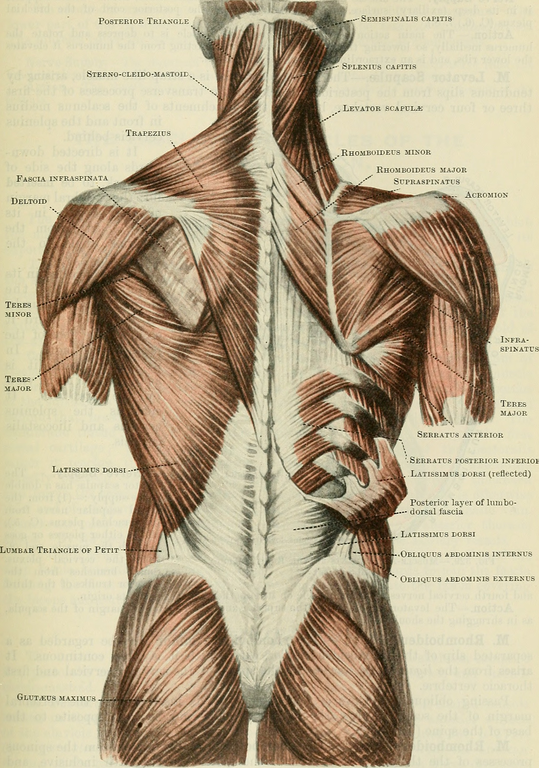 Home - Anatomy & Physiology - LibGuides at Los Angeles Pierce College