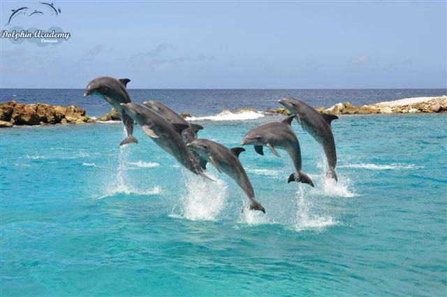File:Dolphin Show.jpg - Wikimedia Commons
