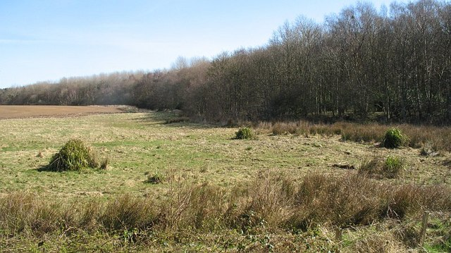 Edge of Binning Wood - geograph.org.uk - 1312615