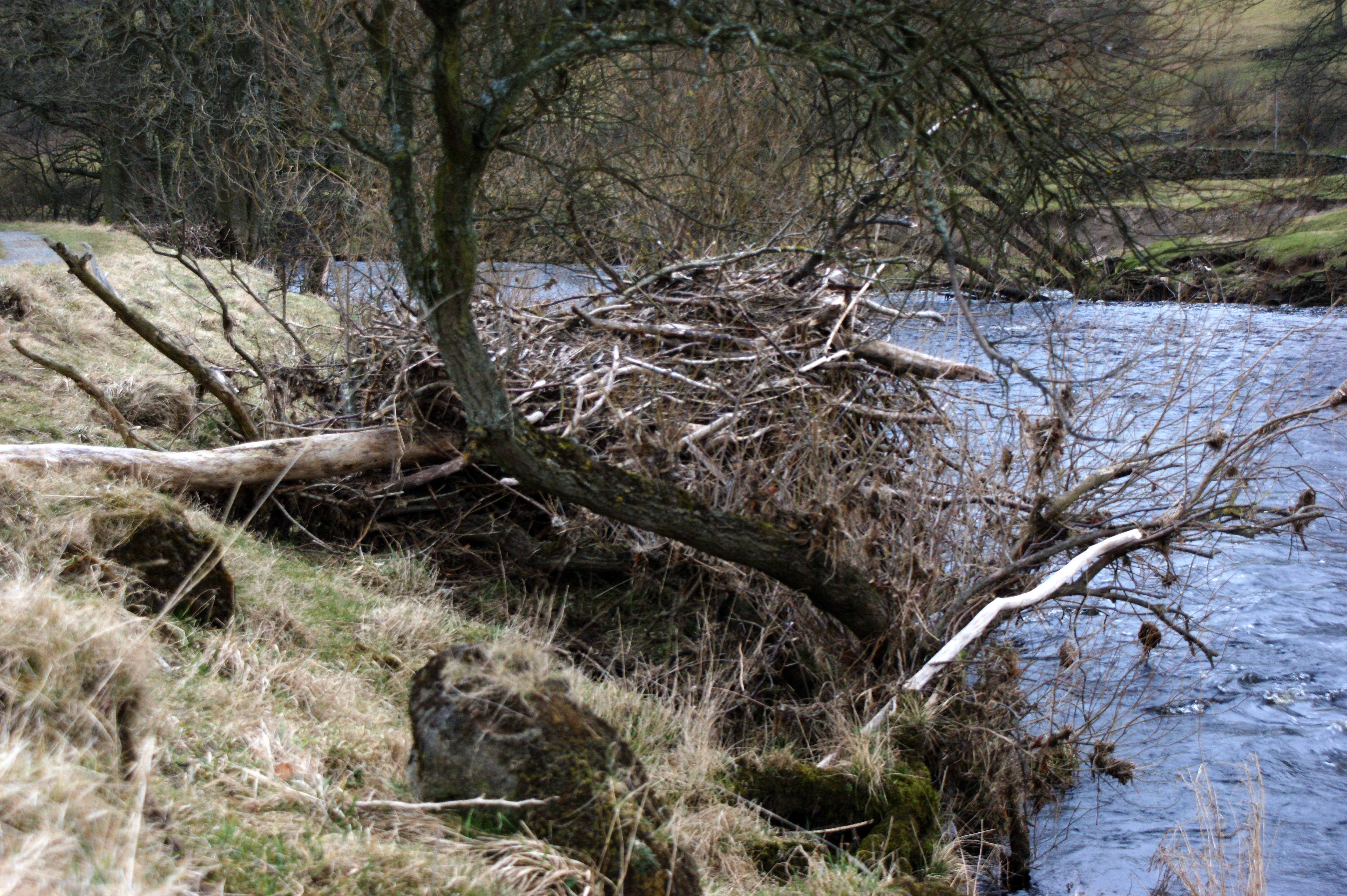 Image Result For Is Driftwood Good