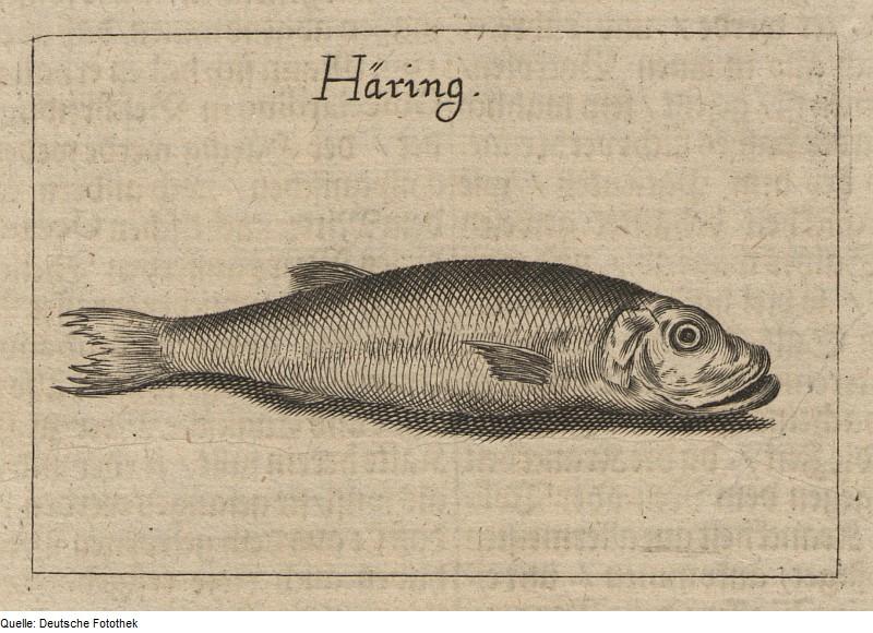 Suolasilli on perinteinen joulukala