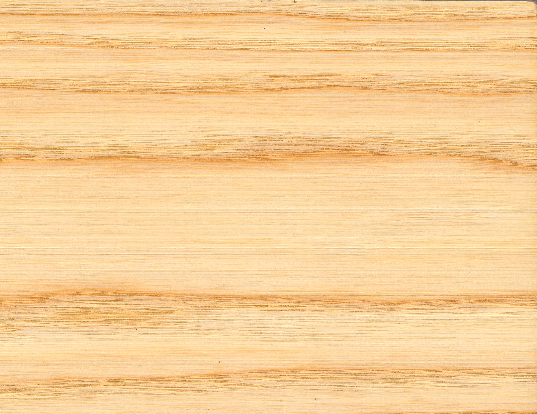 File Fraxinus Excelsior Wood Tangent Section 1 Beentree Jpg