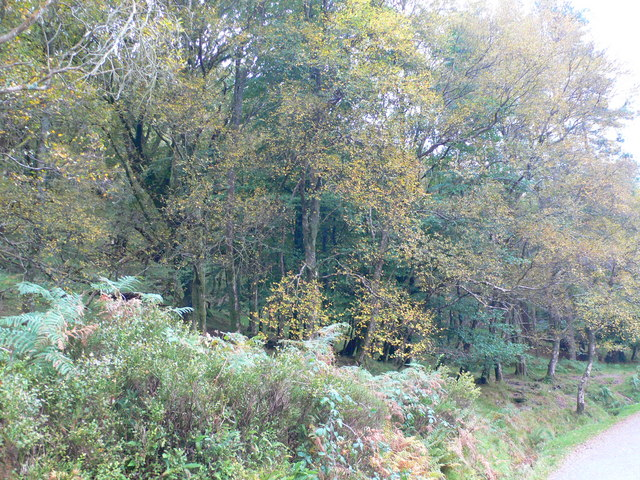 Glendalough Woods Nature Reserve - geograph.org.uk - 1545935