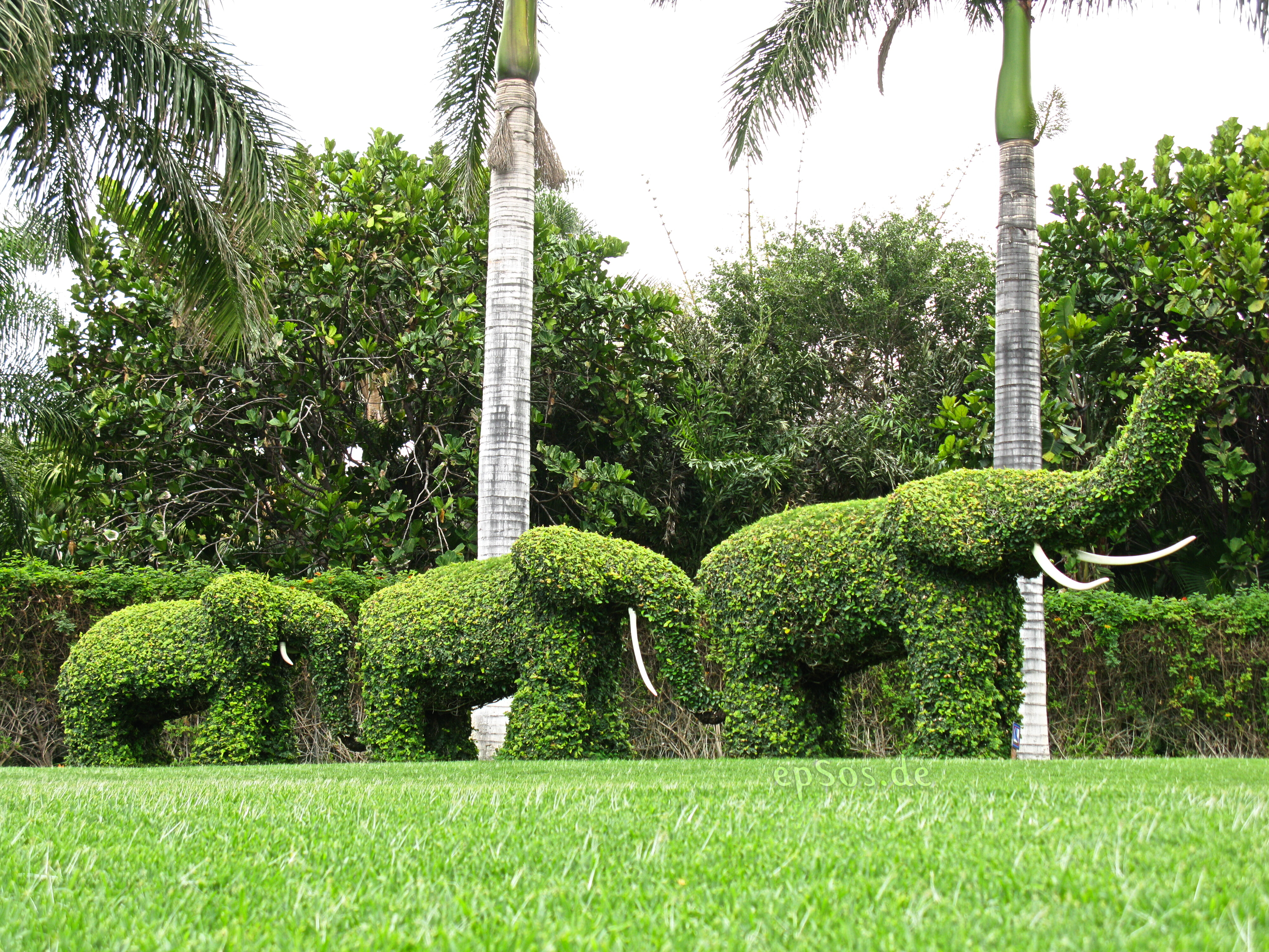 File Green Elephants Garden Wikimedia Commons