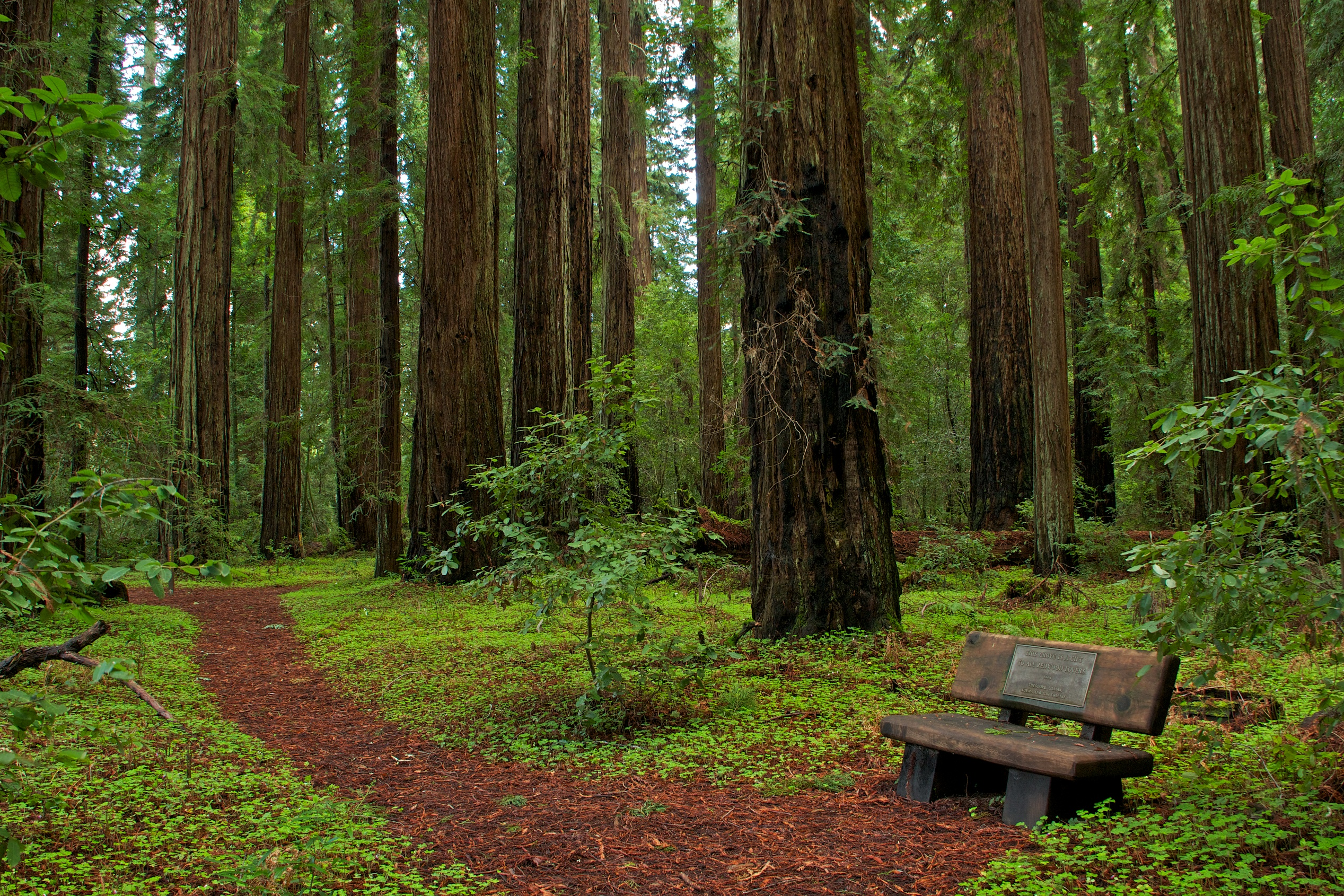 File hendy woods state wikimedia commons for Most beautiful wood