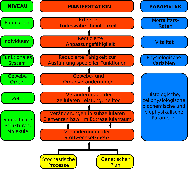 Fantastisch Gewebe Des Menschlichen Körpers Bilder - Physiologie Von ...