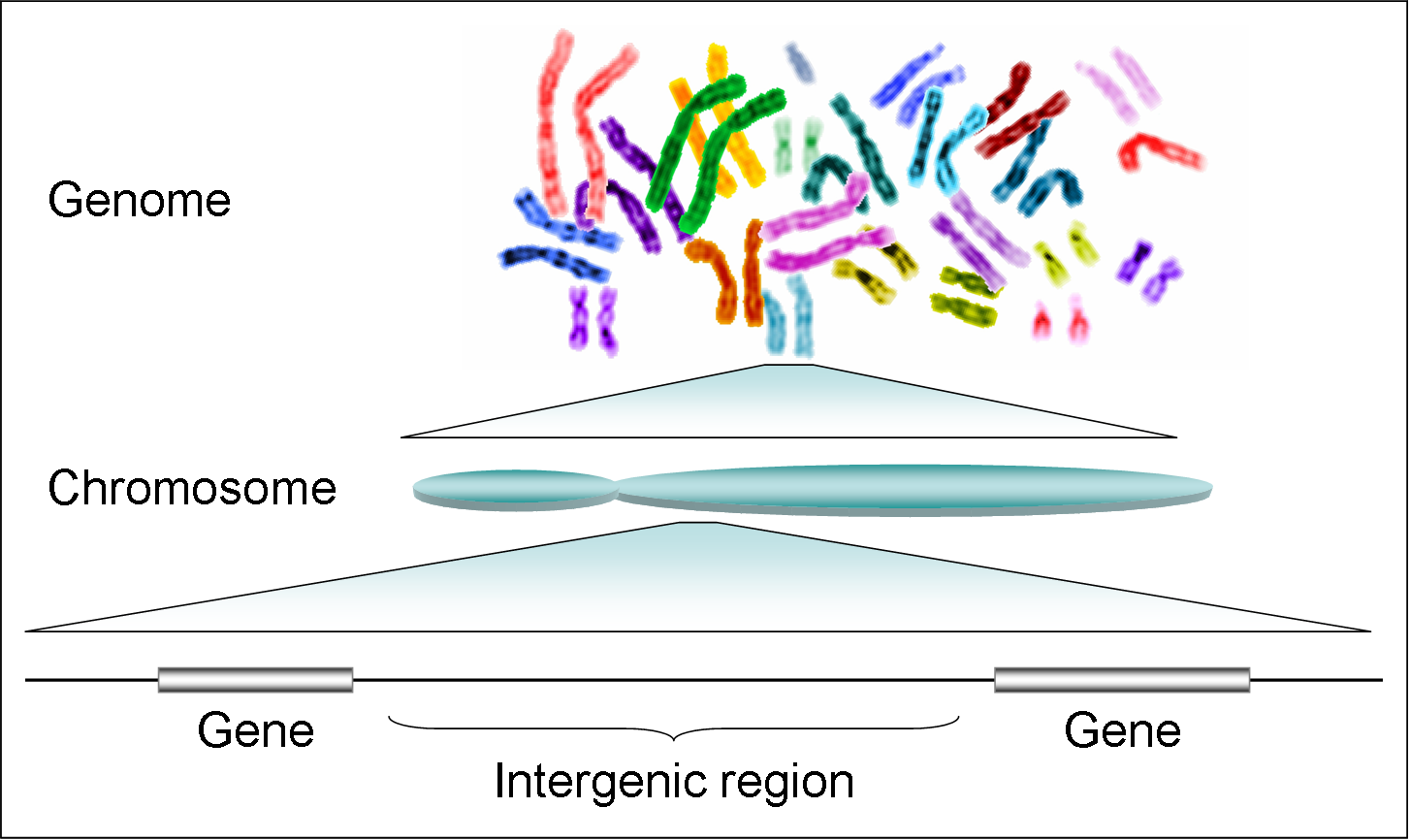 what is genomic dna pdf