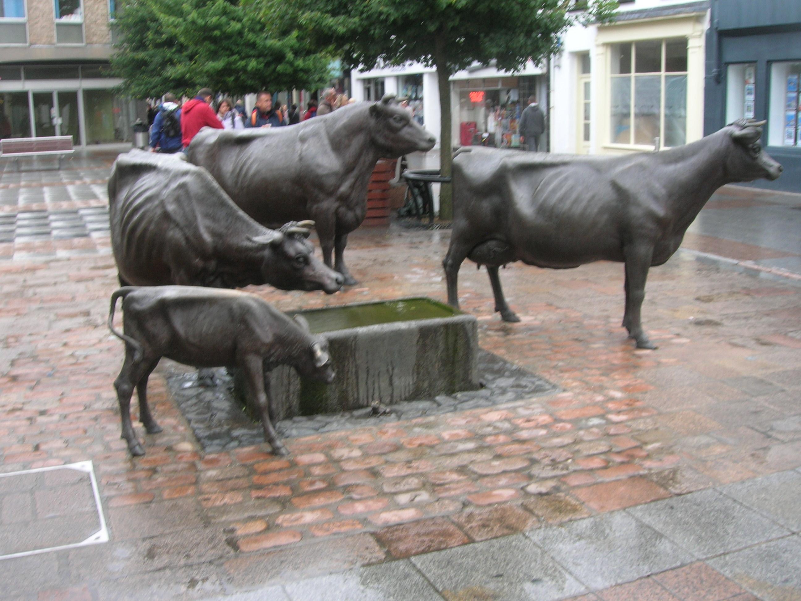 Jersey cattle - Wikipedia