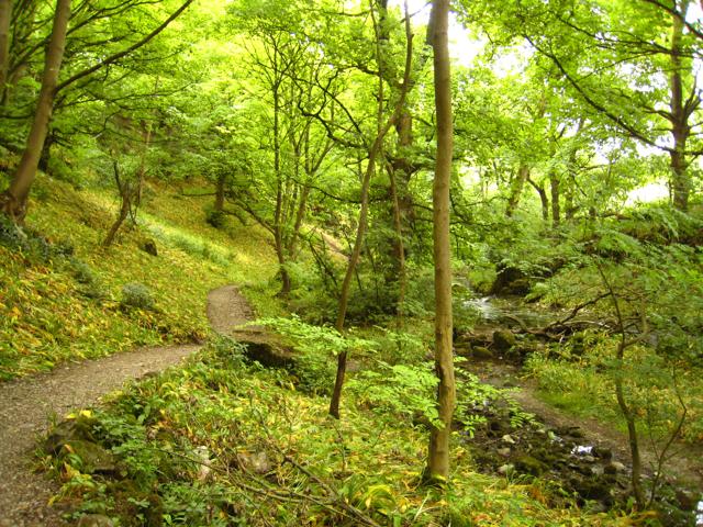 Malham, Wedber Wood - geograph.org.uk - 845159