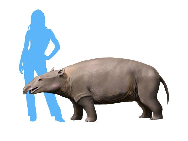 Moeritherium NT small