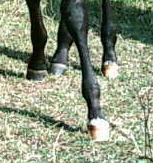 Pferdefüße2.jpg