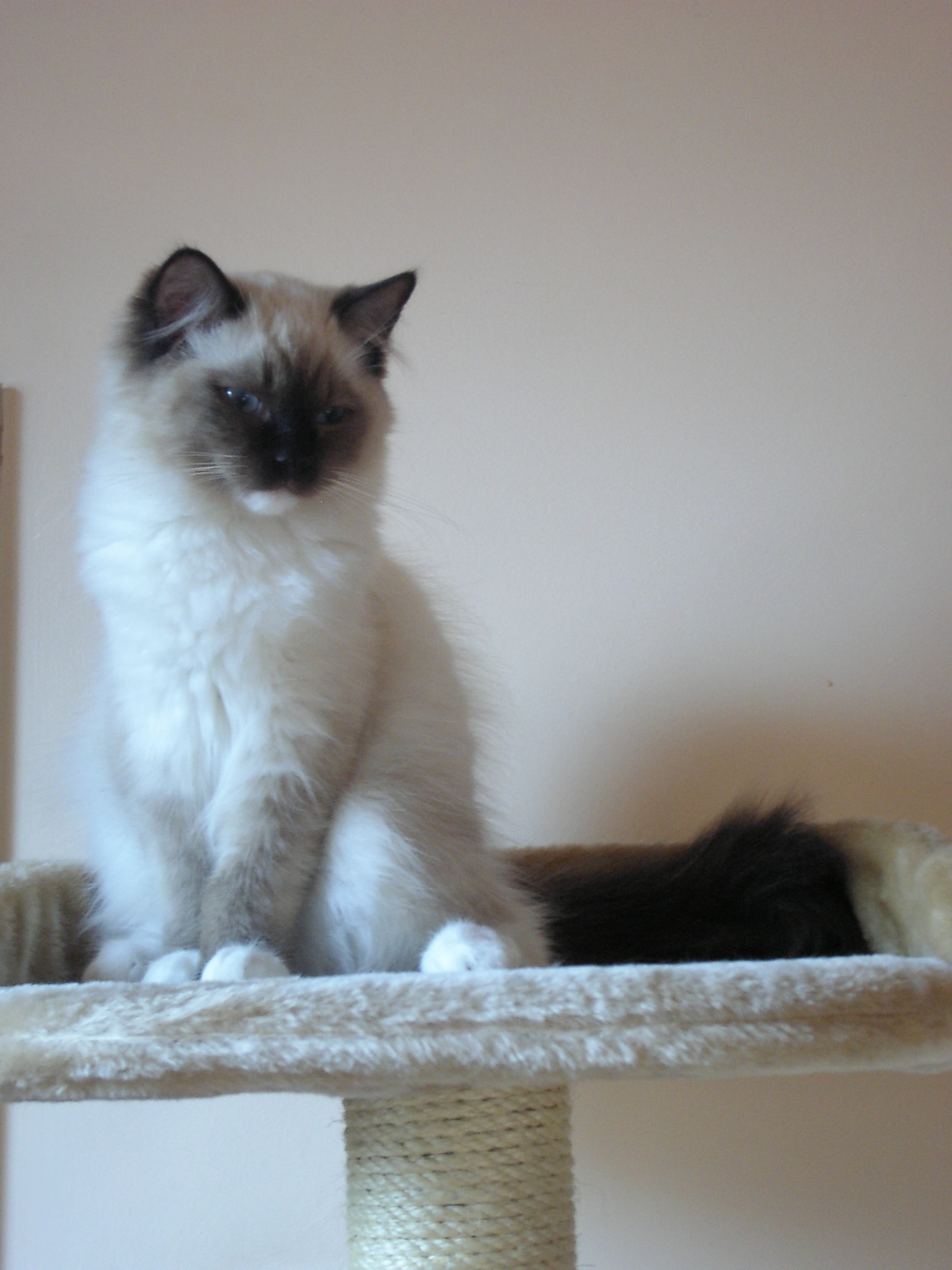 Cat White And Black Dandruff