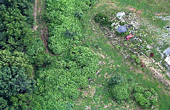 Aerial view of guerrilla cannabis plot